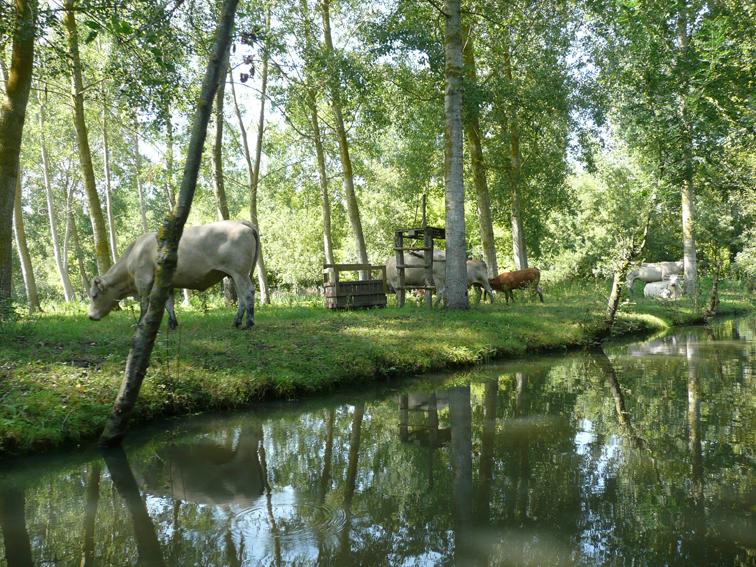 Vache en bord de venise verte